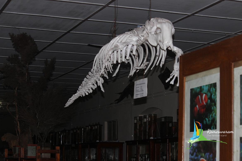 Mandapam Museum
