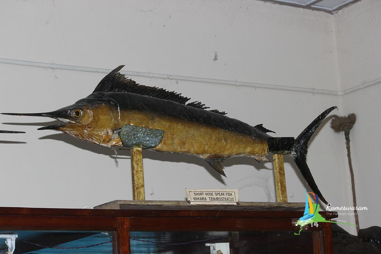 (CMFRI) Marine Museum at Mandapam