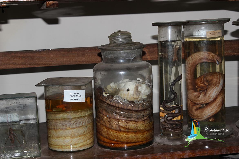 cmfri-museum-aquarium-rameshwaram
