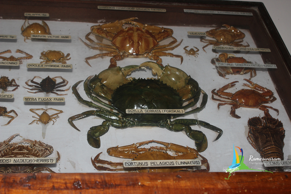 museum-aquarium-cmfri-rameshwaram-india-2