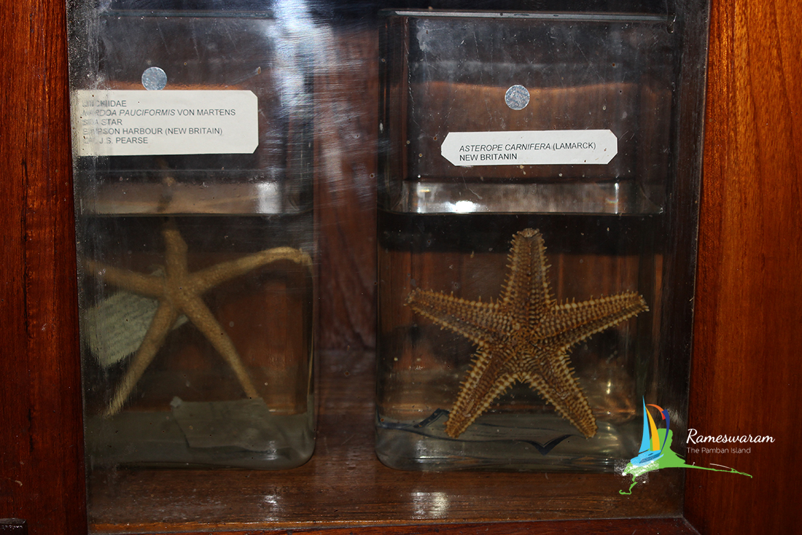 museum-aquarium-cmfri-rameswaram-india