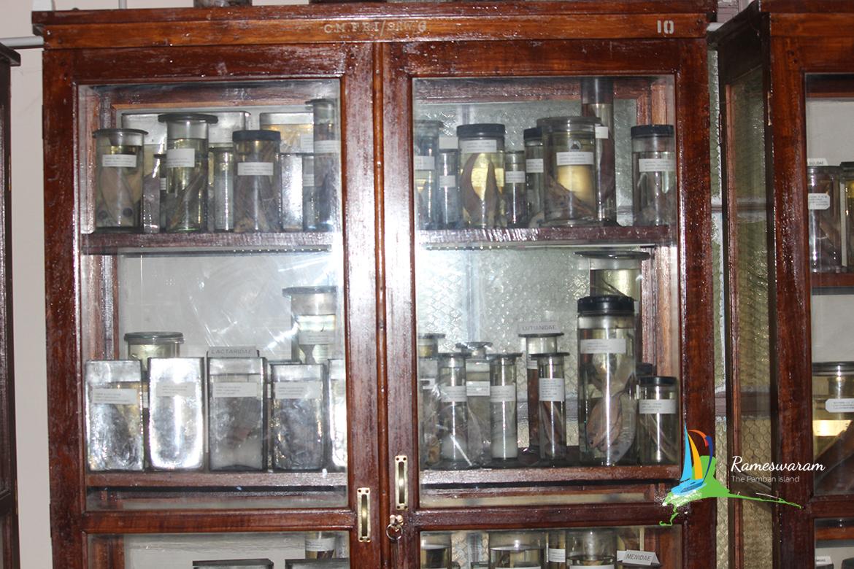 museum-at-rameswaram