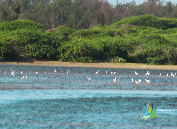 rameswaram Birds Sanctuaries