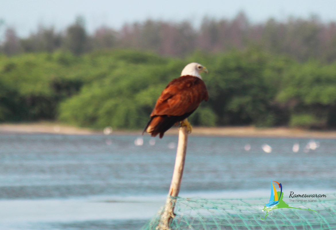 rameswaram-birds-sanctuaries-sightseeing