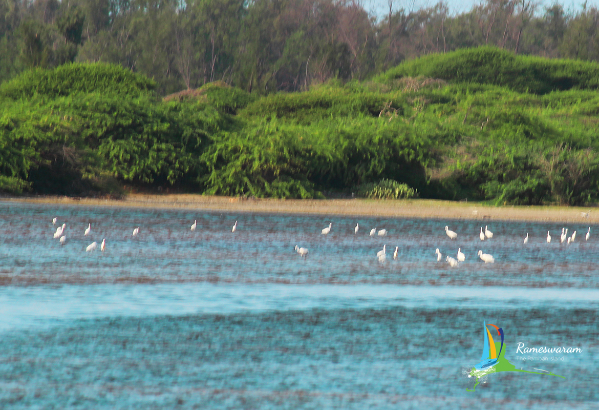 rameswaram-birds-sanctuaries