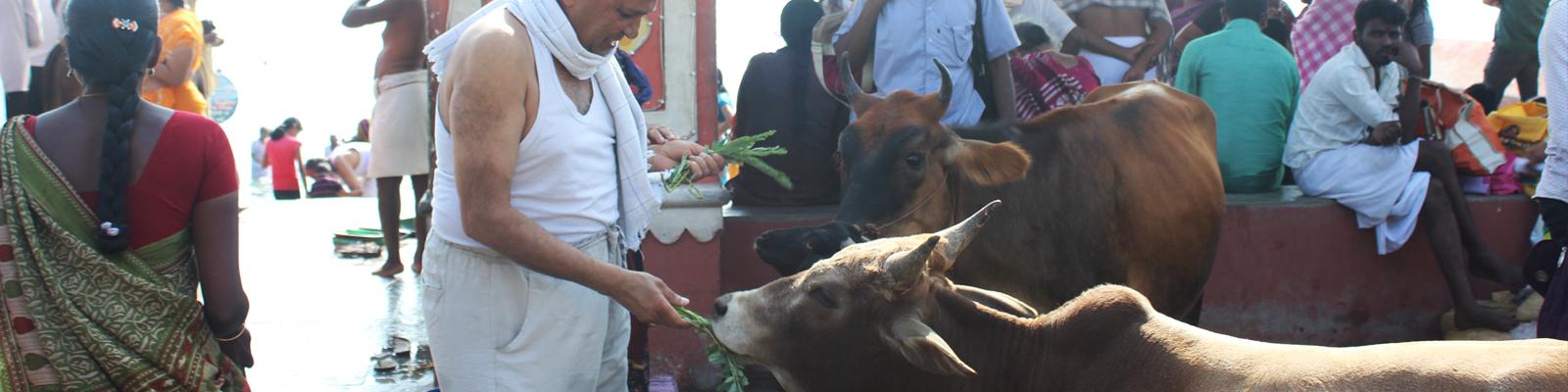 rameswaram-special-poojas